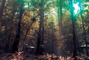 jungle-396510_1280